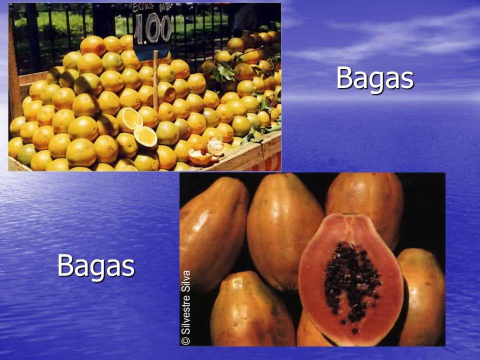 Bagas Bagas