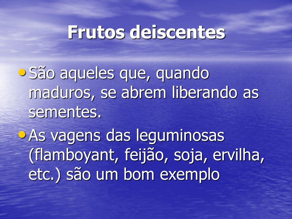 Frutos deiscentes São aqueles que, quando maduros, se abrem liberando as sementes. São aqueles que, quando maduros, se abrem liberando as sementes. As