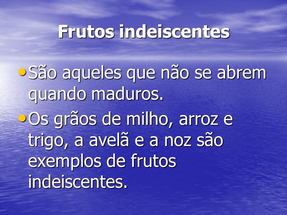 Frutos indeiscentes São aqueles que não se abrem quando maduros. São aqueles que não se abrem quando maduros. Os grãos de milho, arroz e trigo, a avel