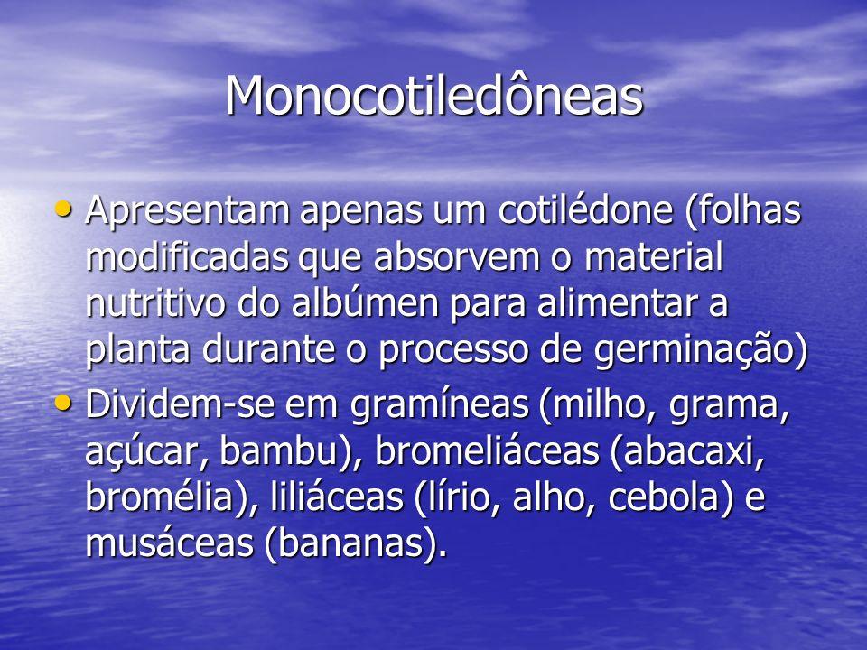 Monocotiledôneas Apresentam apenas um cotilédone (folhas modificadas que absorvem o material nutritivo do albúmen para alimentar a planta durante o pr