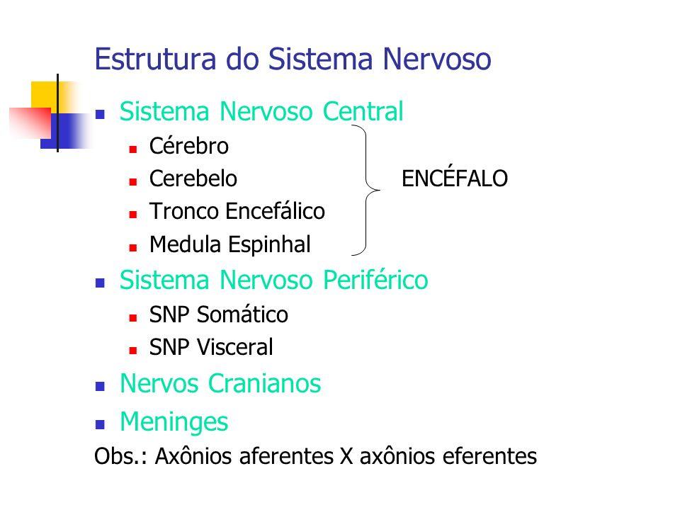 Estrutura do Sistema Nervoso Sistema Nervoso Central Cérebro Cerebelo ENCÉFALO Tronco Encefálico Medula Espinhal Sistema Nervoso Periférico SNP Somáti