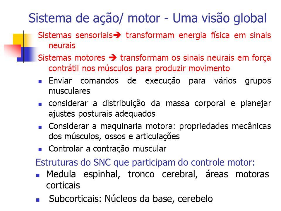 Sistema de ação/ motor - Uma visão global Sistemas sensoriais transformam energia física em sinais neurais Sistemas motores transformam os sinais neur