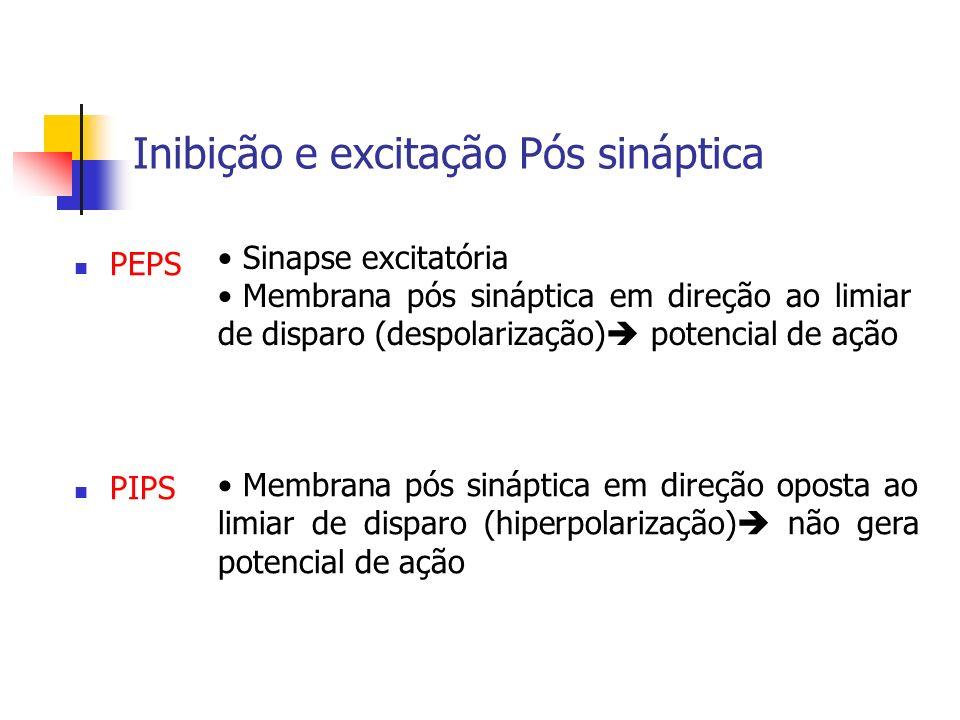 Inibição e excitação Pós sináptica PEPS Sinapse excitatória Membrana pós sináptica em direção ao limiar de disparo (despolarização) potencial de ação