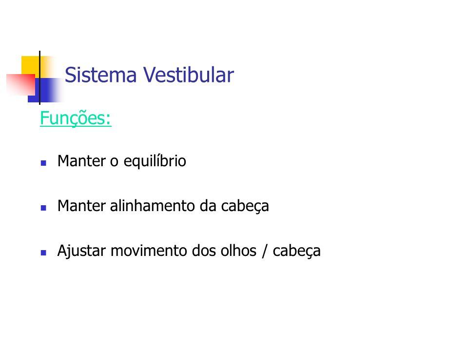 Sistema Vestibular Manter o equilíbrio Manter alinhamento da cabeça Ajustar movimento dos olhos / cabeça Funções: