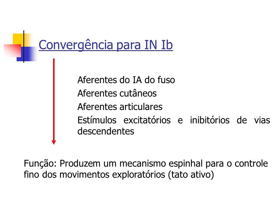 Convergência para IN Ib Aferentes do IA do fuso Aferentes cutâneos Aferentes articulares Estímulos excitatórios e inibitórios de vias descendentes Fun