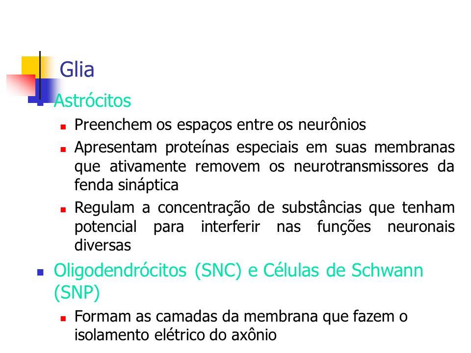 Glia Astrócitos Preenchem os espaços entre os neurônios Apresentam proteínas especiais em suas membranas que ativamente removem os neurotransmissores