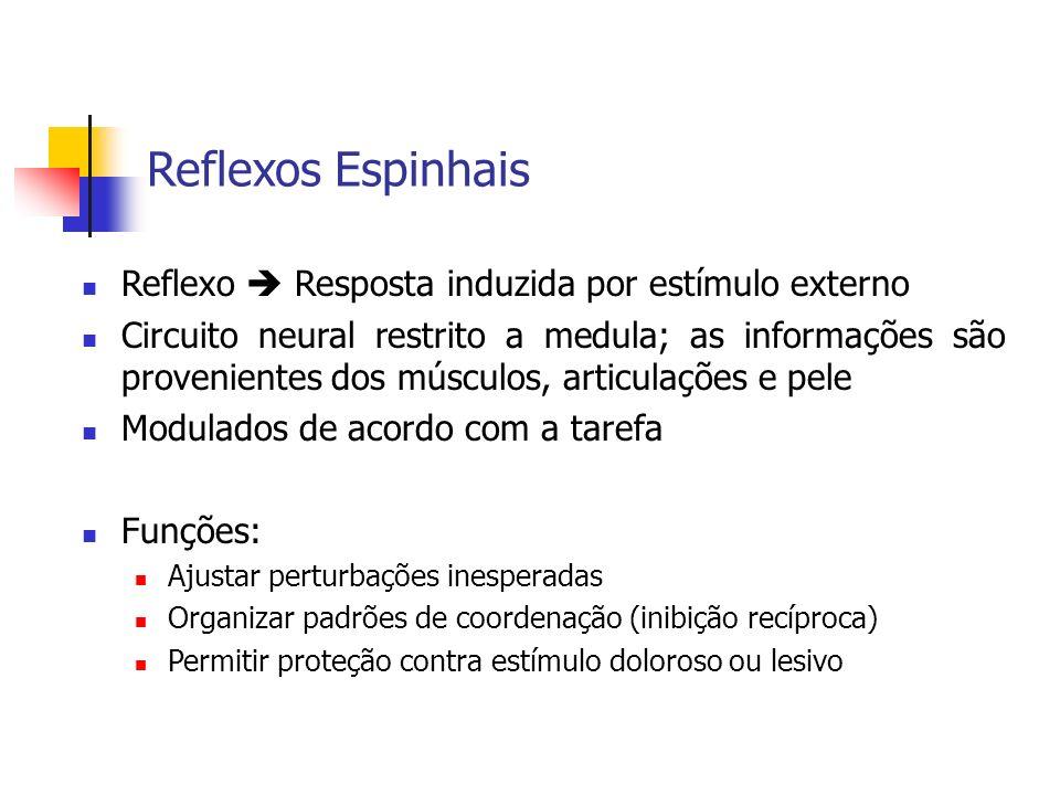 Reflexos Espinhais Reflexo Resposta induzida por estímulo externo Circuito neural restrito a medula; as informações são provenientes dos músculos, art