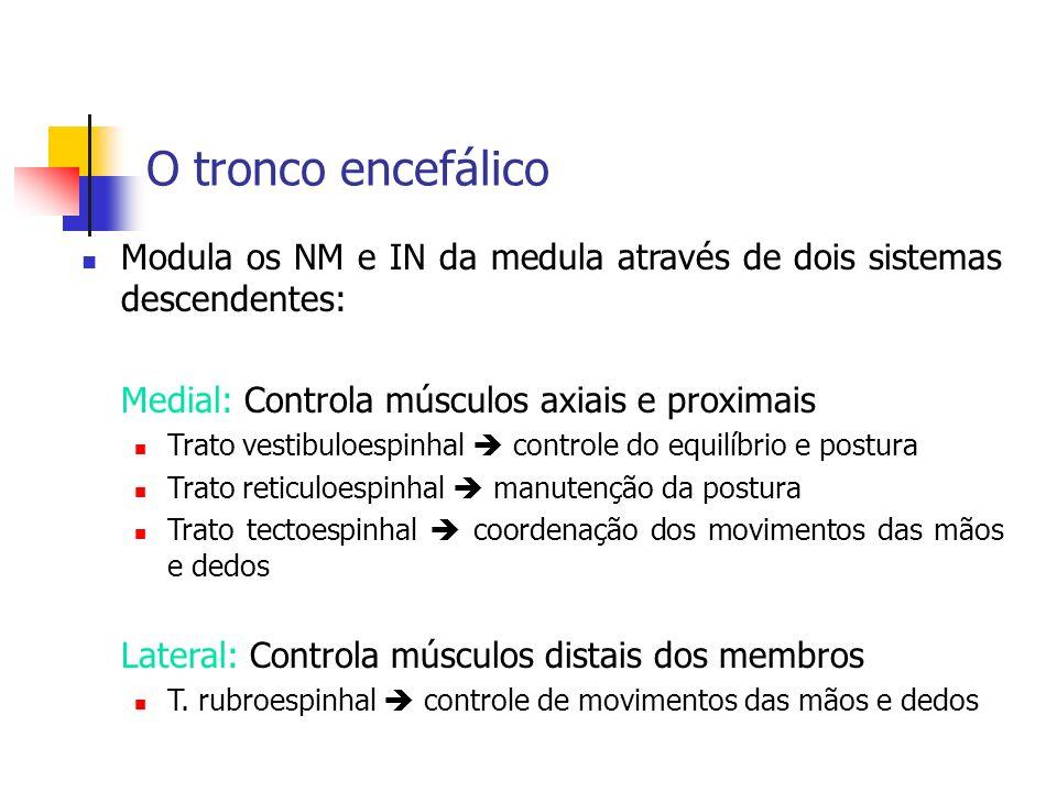O tronco encefálico Modula os NM e IN da medula através de dois sistemas descendentes: Medial: Controla músculos axiais e proximais Trato vestibuloesp
