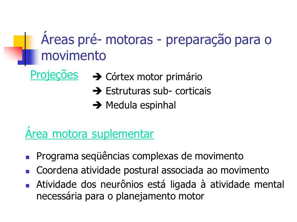 Áreas pré- motoras - preparação para o movimento Córtex motor primário Estruturas sub- corticais Medula espinhal Programa seqüências complexas de movi