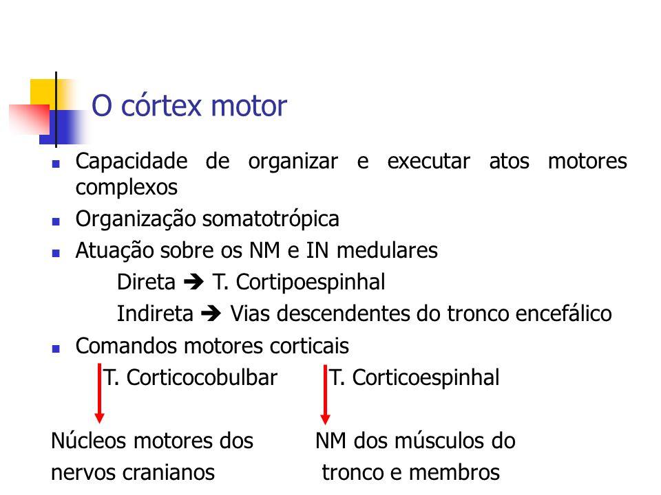 O córtex motor Capacidade de organizar e executar atos motores complexos Organização somatotrópica Atuação sobre os NM e IN medulares Direta T. Cortip