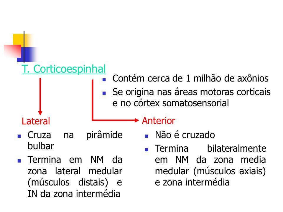 T. Corticoespinhal Contém cerca de 1 milhão de axônios Se origina nas áreas motoras corticais e no córtex somatosensorial Cruza na pirâmide bulbar Ter