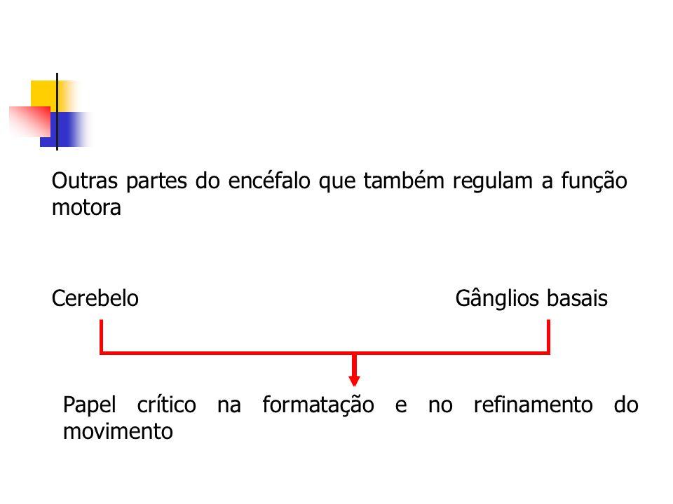 Outras partes do encéfalo que também regulam a função motora CerebeloGânglios basais Papel crítico na formatação e no refinamento do movimento