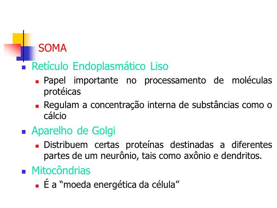 Retículo Endoplasmático Liso Papel importante no processamento de moléculas protéicas Regulam a concentração interna de substâncias como o cálcio Apar