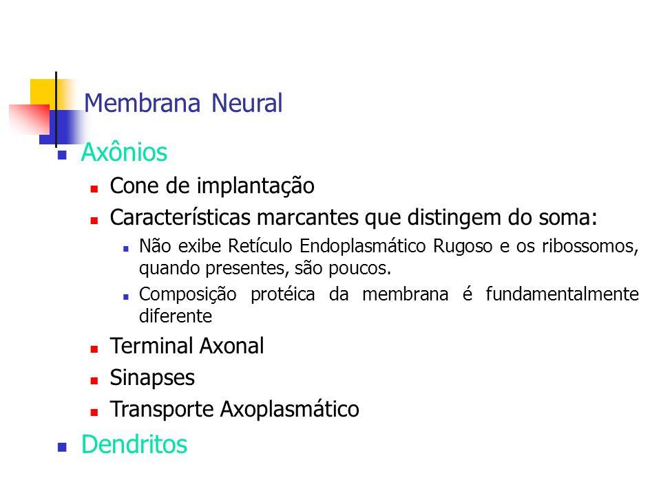 Membrana Neural Axônios Cone de implantação Características marcantes que distingem do soma: Não exibe Retículo Endoplasmático Rugoso e os ribossomos,
