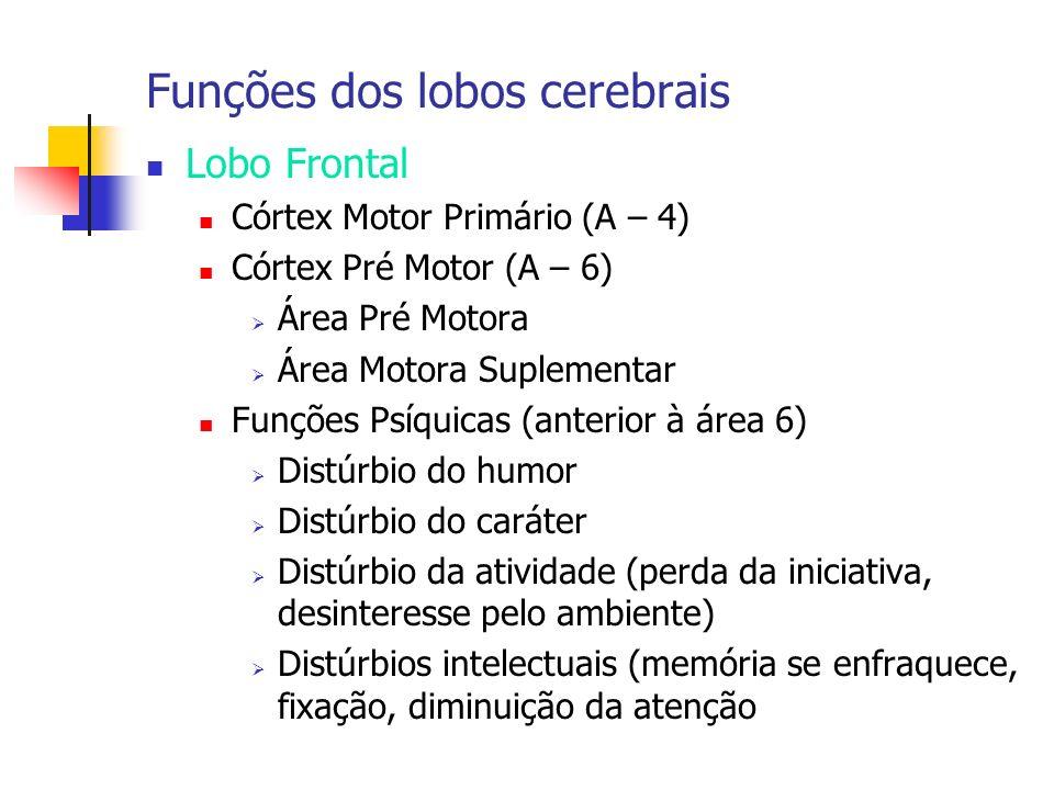 Funções dos lobos cerebrais Lobo Frontal Córtex Motor Primário (A – 4) Córtex Pré Motor (A – 6) Área Pré Motora Área Motora Suplementar Funções Psíqui