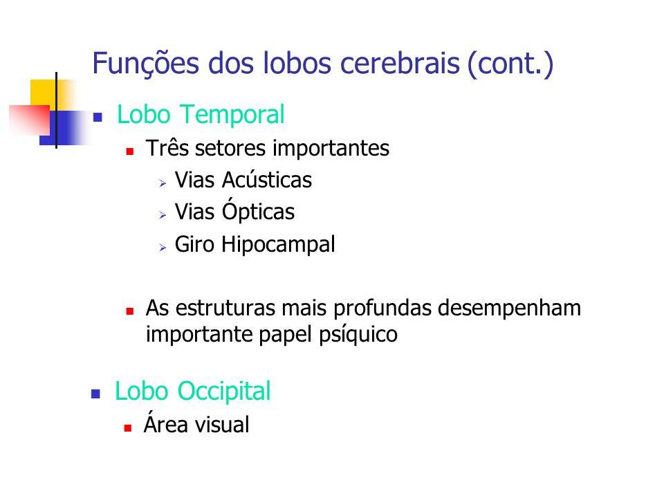Funções dos lobos cerebrais (cont.) Lobo Temporal Três setores importantes Vias Acústicas Vias Ópticas Giro Hipocampal As estruturas mais profundas de