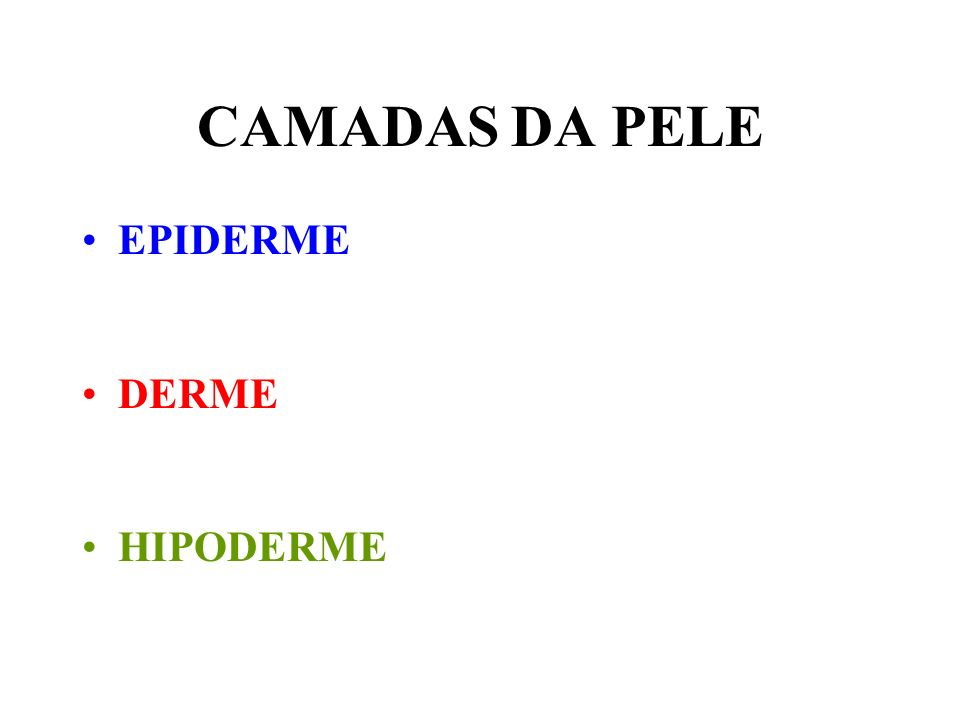 CAMADAS DA PELE EPIDERME DERME