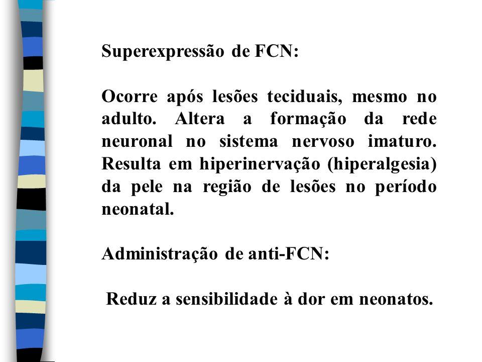 Superexpressão de FCN: Ocorre após lesões teciduais, mesmo no adulto. Altera a formação da rede neuronal no sistema nervoso imaturo. Resulta em hiperi