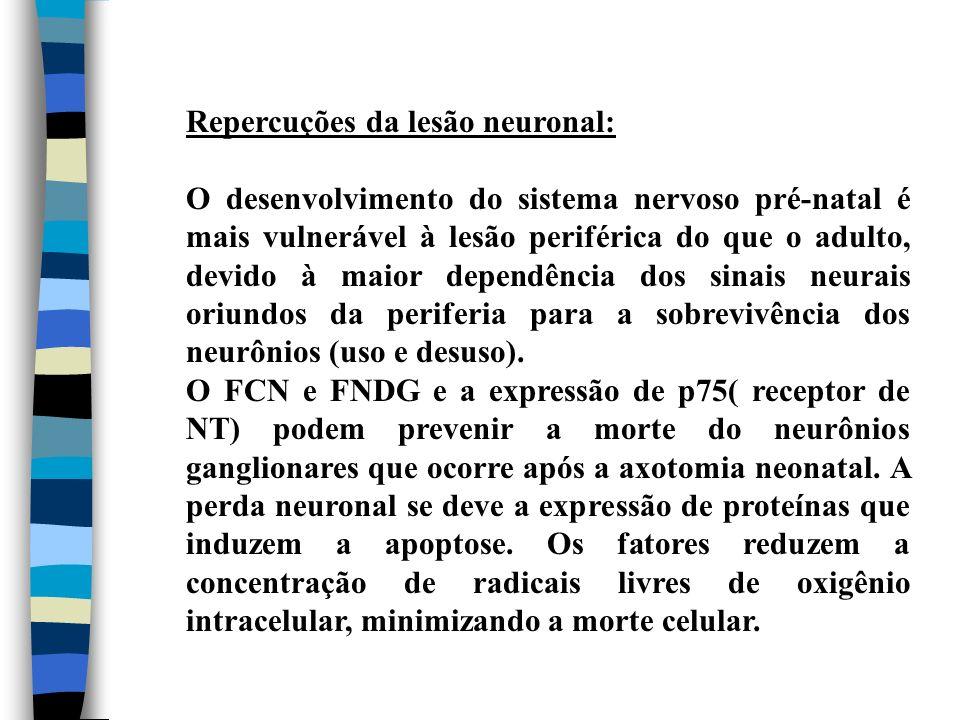 Repercuções da lesão neuronal: O desenvolvimento do sistema nervoso pré-natal é mais vulnerável à lesão periférica do que o adulto, devido à maior dep