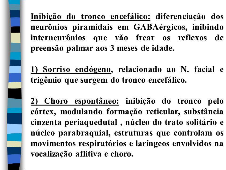 Inibição do tronco encefálico: diferenciação dos neurônios piramidais em GABAérgicos, inibindo interneurônios que vão frear os reflexos de preensão pa