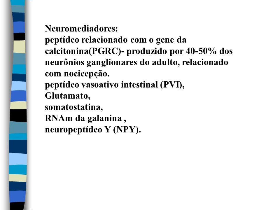 Neuromediadores: peptídeo relacionado com o gene da calcitonina(PGRC)- produzido por 40-50% dos neurônios ganglionares do adulto, relacionado com noci