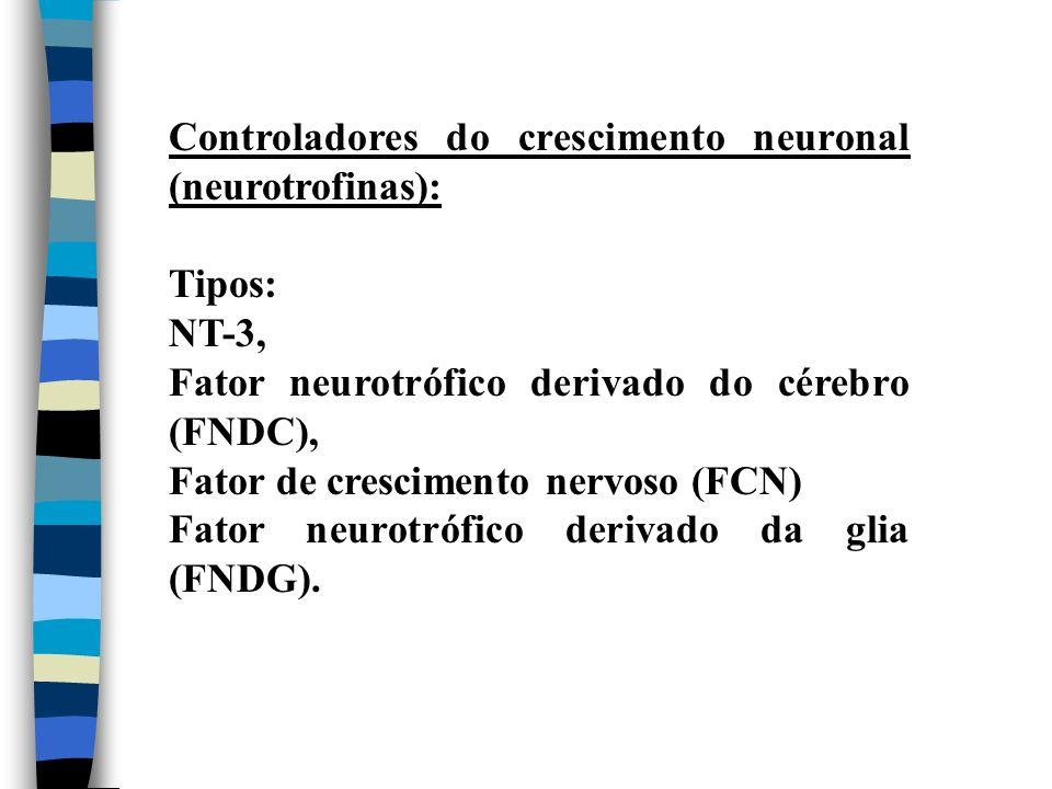 Controladores do crescimento neuronal (neurotrofinas): Tipos: NT-3, Fator neurotrófico derivado do cérebro (FNDC), Fator de crescimento nervoso (FCN)