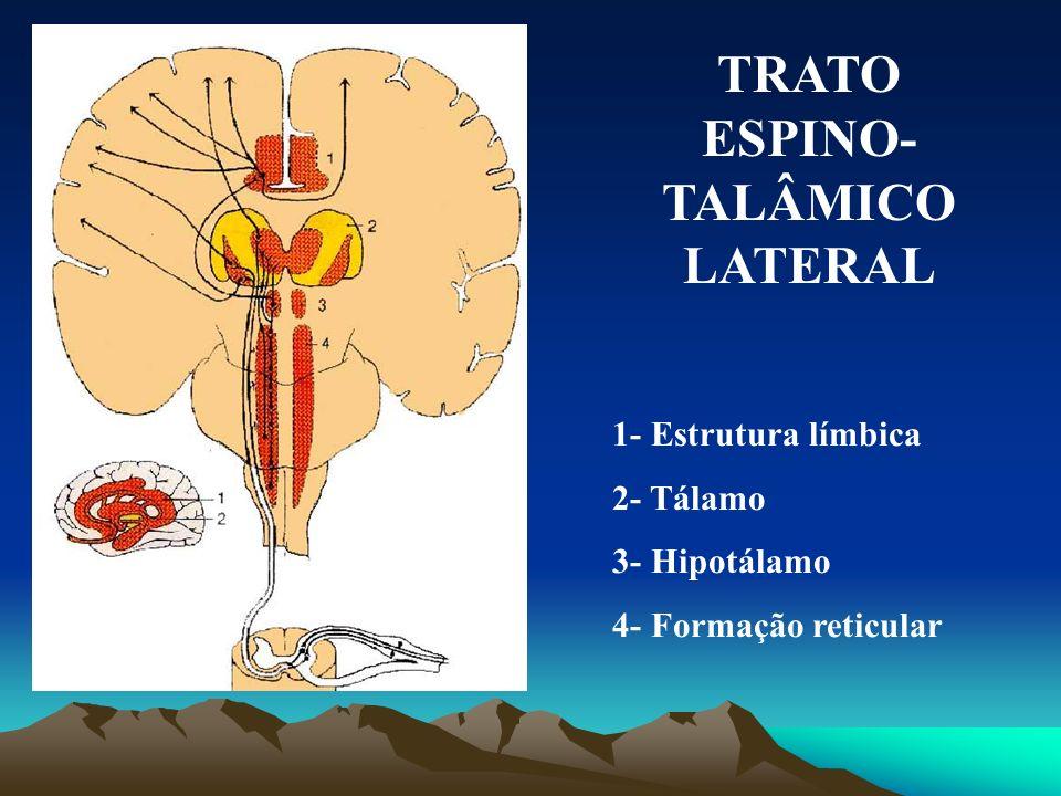 TRATO NEO- ESPINO TALÂMICO 1- Tálamo