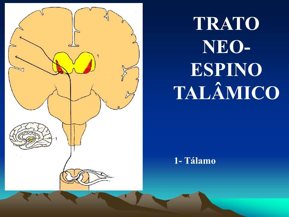 TRATO PALEO- ESPINOTALÂMICO 1- Estrutura anterior límbica 2- Tálamo 3- Hipotálamo 4- Formação reticular