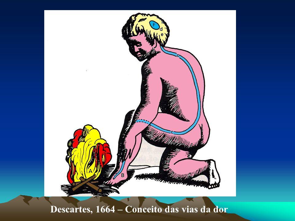 Descartes, 1664 – Conceito das vias da dor