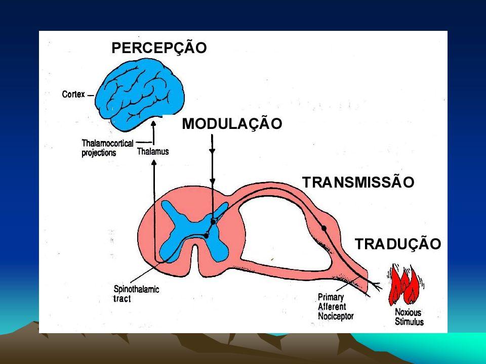 Neurofisiologia da dor Tradução (nociceptores) Transmissão (fibras aferentes primárias, corno dorsal da medula, tratos ascendentes) Interpretação (processamento cortical, processamento límbico) Modulação (controle descendente e mediadores neuro-humorais )