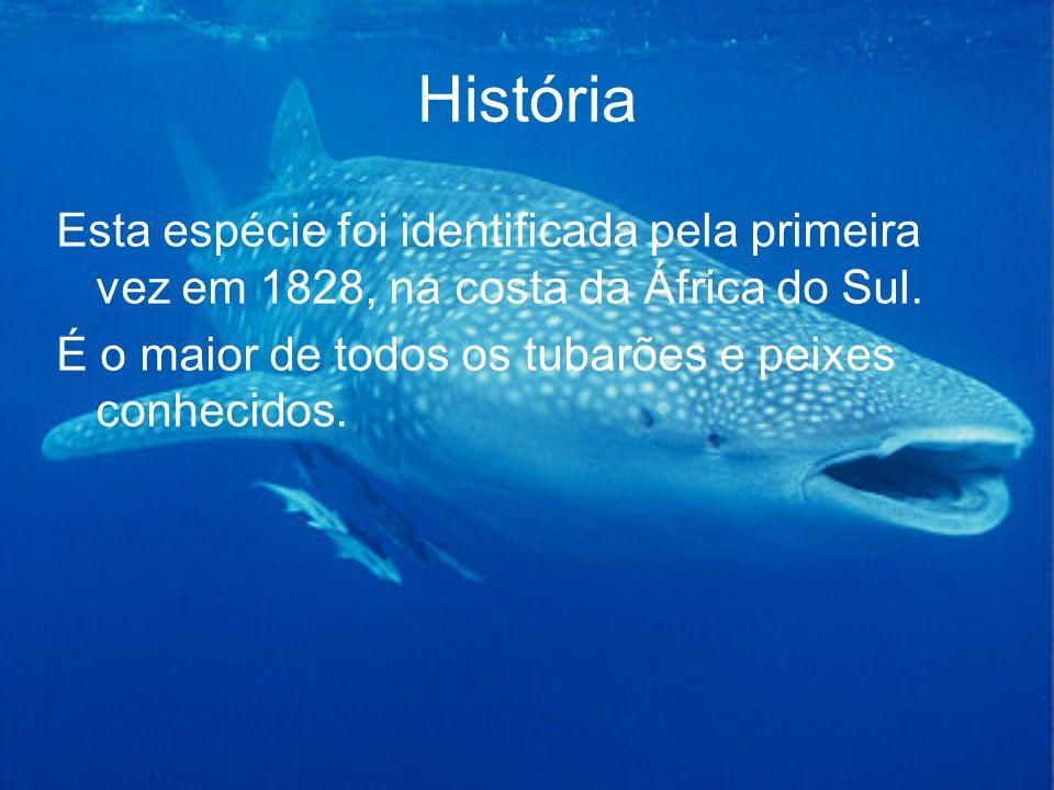 História Esta espécie foi identificada pela primeira vez em 1828, na costa da África do Sul. É o maior de todos os tubarões e peixes conhecidos.