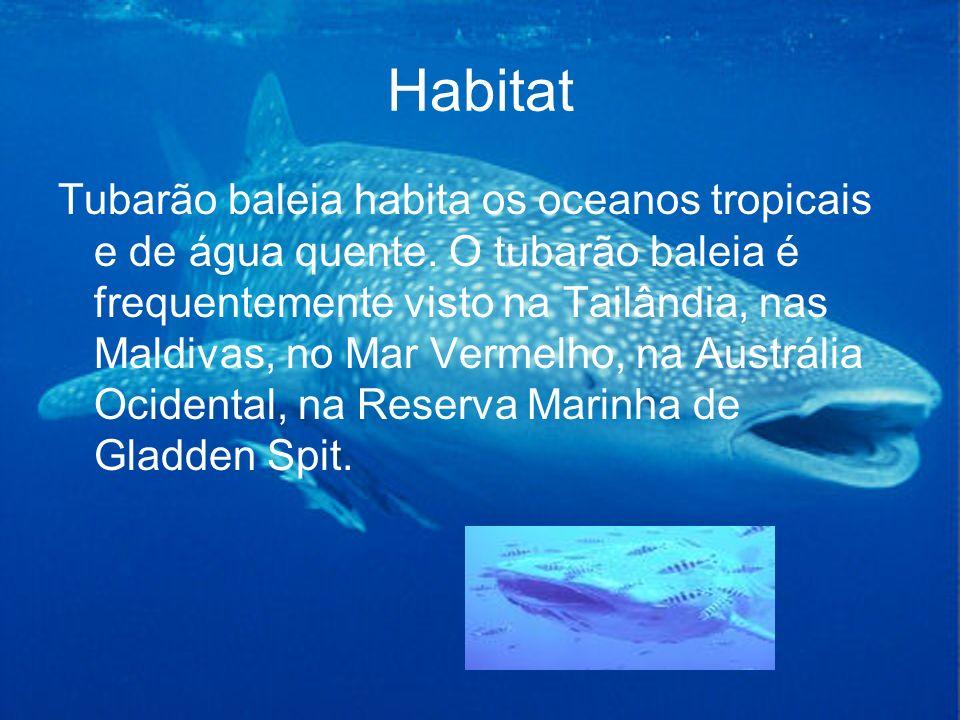 Habitat Tubarão baleia habita os oceanos tropicais e de água quente. O tubarão baleia é frequentemente visto na Tailândia, nas Maldivas, no Mar Vermel