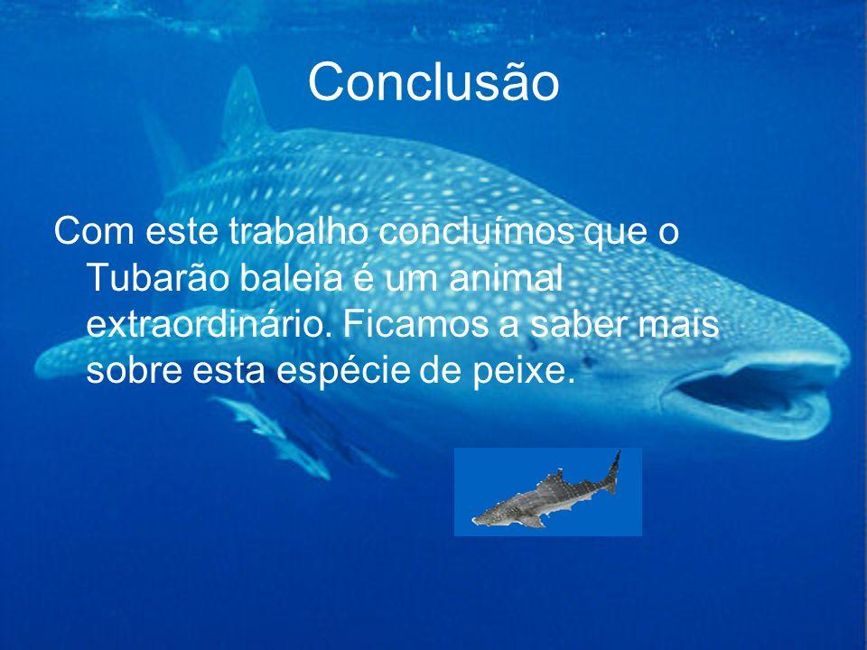 Conclusão Com este trabalho concluímos que o Tubarão baleia é um animal extraordinário. Ficamos a saber mais sobre esta espécie de peixe.