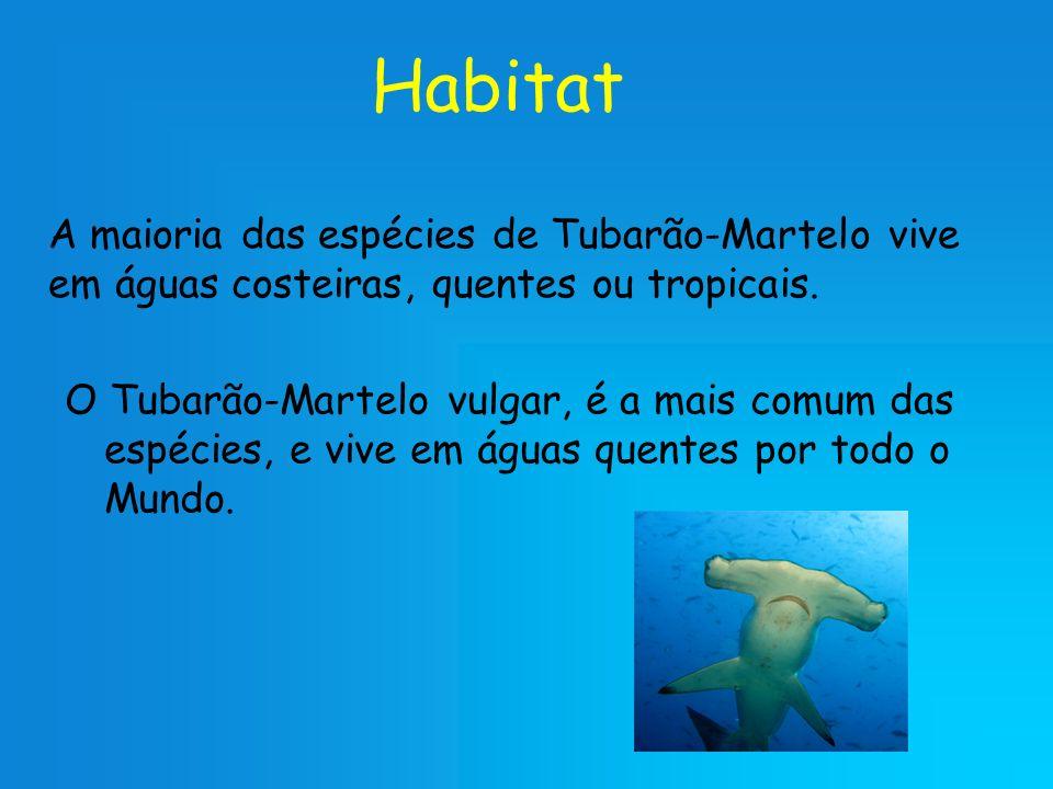 Habitat A maioria das espécies de Tubarão-Martelo vive em águas costeiras, quentes ou tropicais. O Tubarão-Martelo vulgar, é a mais comum das espécies