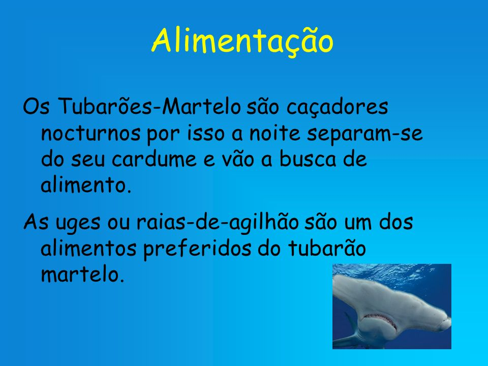 Alimentação Os Tubarões-Martelo são caçadores nocturnos por isso a noite separam-se do seu cardume e vão a busca de alimento. As uges ou raias-de-agil