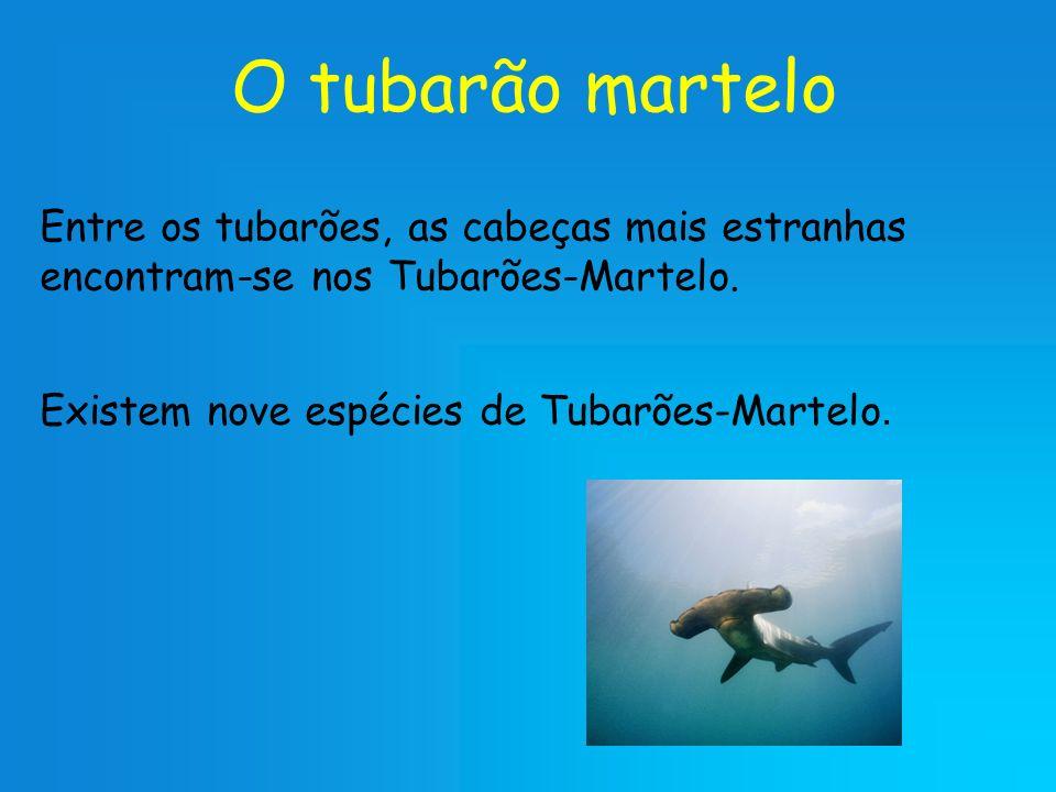 O tubarão martelo Entre os tubarões, as cabeças mais estranhas encontram-se nos Tubarões-Martelo. Existem nove espécies de Tubarões-Martelo.