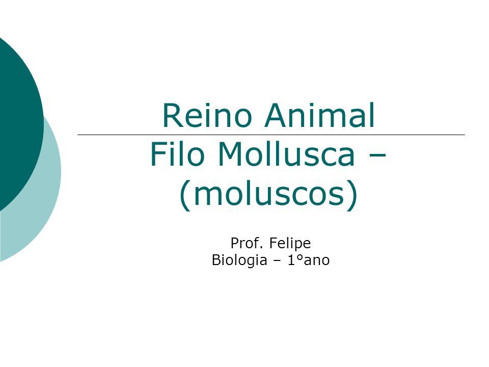 Reino Animal Filo Mollusca – (moluscos) Prof. Felipe Biologia – 1°ano