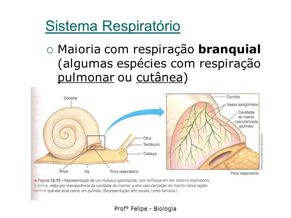 Sistema Respiratório Maioria com respiração branquial (algumas espécies com respiração pulmonar ou cutânea)