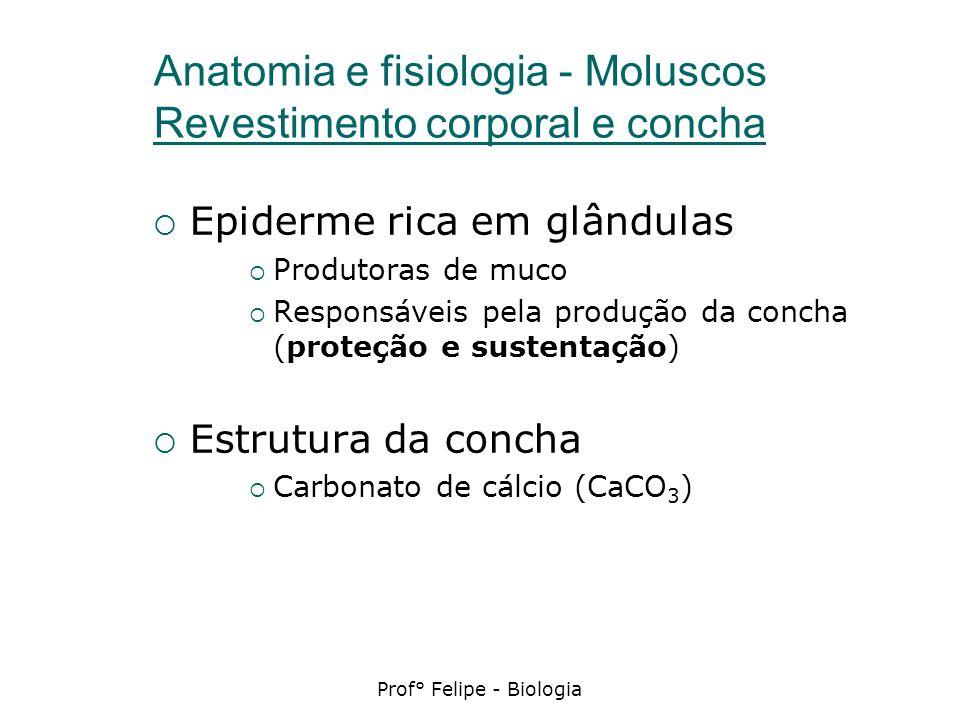 Prof° Felipe - Biologia Anatomia e fisiologia - Moluscos Revestimento corporal e concha Epiderme rica em glândulas Produtoras de muco Responsáveis pel
