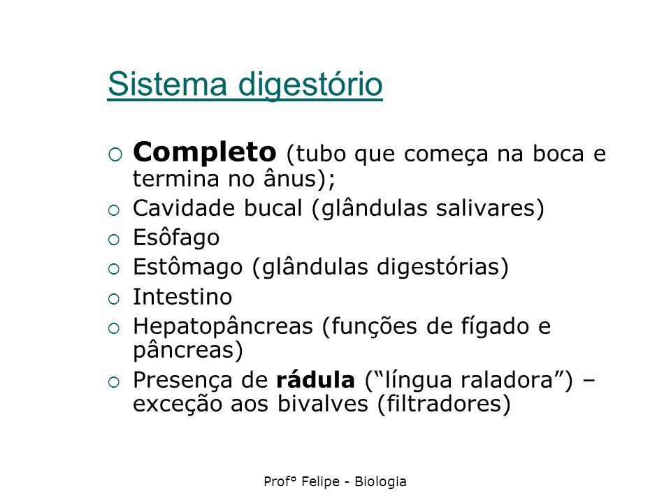 Sistema digestório Completo (tubo que começa na boca e termina no ânus); Cavidade bucal (glândulas salivares) Esôfago Estômago (glândulas digestórias)