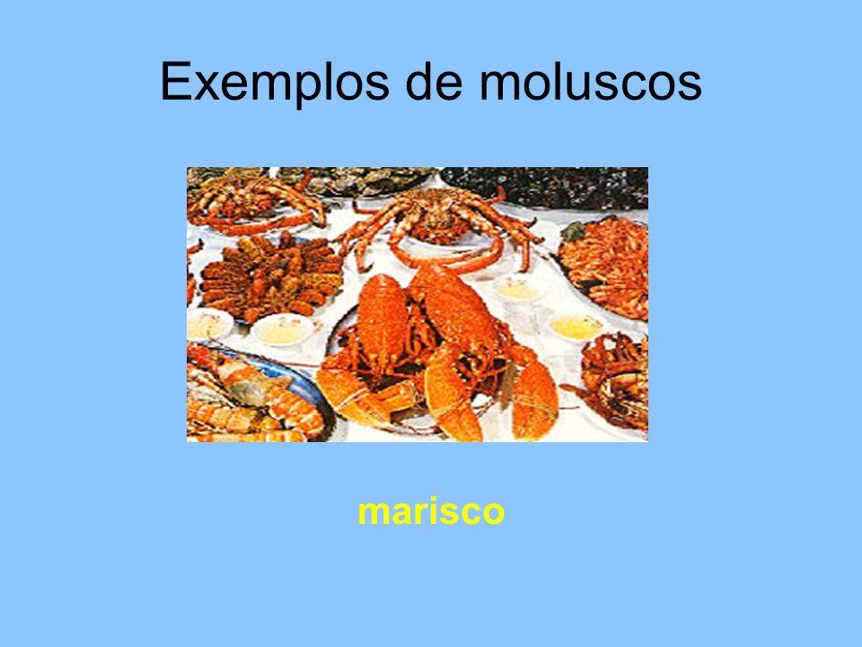 Os moluscos são invertebrados de corpo mole.Alguns têm conchas.