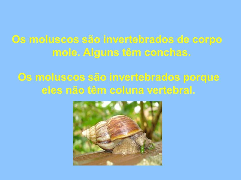 Os moluscos são invertebrados de corpo mole. Alguns têm conchas. Os moluscos são invertebrados porque eles não têm coluna vertebral.