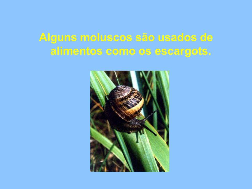 Os ovos são pequenos, possuem uma casca calcárea e são depositados no solo.