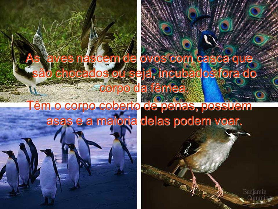 As aves nascem de ovos com casca que são chocados ou seja, incubados fora do corpo da fêmea. Têm o corpo coberto de penas, possuem asas e a maioria de