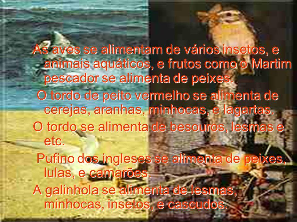 As aves se alimentam de vários insetos, e animais aquáticos, e frutos como o Martim pescador se alimenta de peixes. O tordo de peito vermelho se alime
