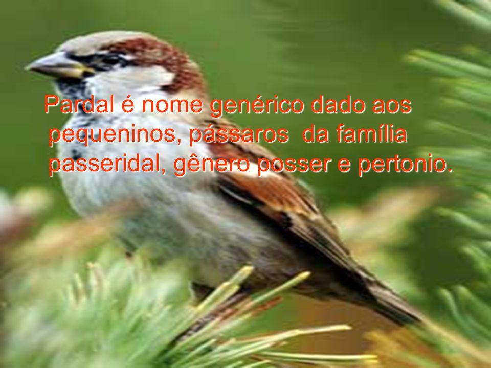 Pardal é nome genérico dado aos pequeninos, pássaros da família passeridal, gênero posser e pertonio. Pardal é nome genérico dado aos pequeninos, páss