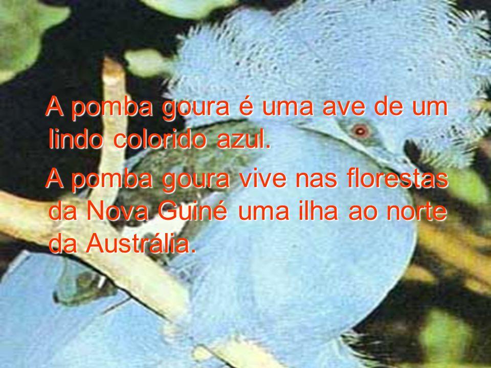 A pomba goura é uma ave de um lindo colorido azul. A pomba goura é uma ave de um lindo colorido azul. A pomba goura vive nas florestas da Nova Guiné u