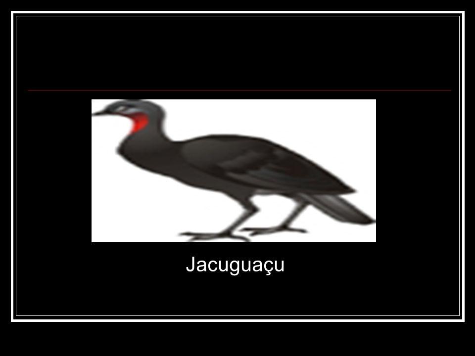 Jacuguaçu