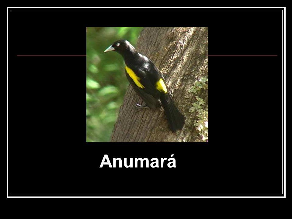 Anumará