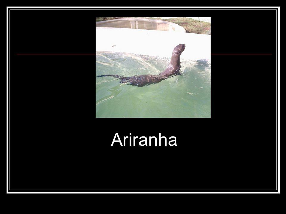 Ariranha